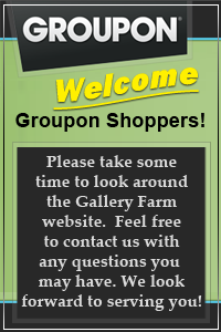Welcome Groupon Customers!!!